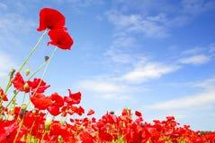 błękitny Holland maczków czerwieni niebo Zdjęcie Royalty Free