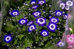Błękitny i zielenieje kwiaty w rynku zdjęcia stock