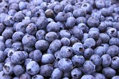 błękitny jagoda kosze zdjęcie royalty free