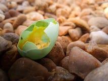 Błękitny jajko mały ptak w ranku Zdjęcia Royalty Free