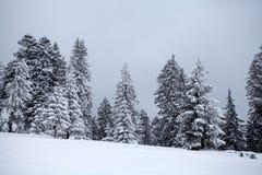 błękitny jasnego jedlinowego ranek nieba śnieżna drzew zima obrazy stock