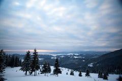 błękitny jasnego jedlinowego ranek nieba śnieżna drzew zima obraz royalty free