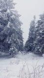błękitny jasnego jedlinowego ranek nieba śnieżna drzew zima Fotografia Royalty Free