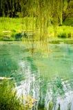 błękitny jeziorna drzewna wierzba Obraz Stock