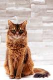 błękitny kamery kota przyrządu cyfrowego skutka form upału wizerunku cyfrowy robi modela nie fotografii napromienianie istny sied Obraz Stock