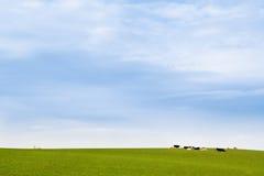 błękitny kościelnej krowy łąkowy nieba biel Fotografia Stock