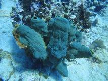 Błękitny koral na dnie morskim obrazy royalty free