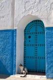 błękitny kota drzwi Fotografia Stock
