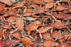 błękitny kraby Obrazy Stock