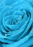 błękitny kropel róży woda Fotografia Stock