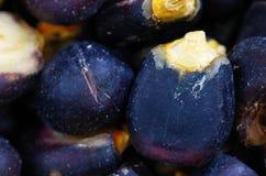 błękitny kukurydzany macro Zdjęcia Stock