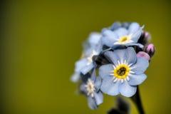 błękitny kwiat Obraz Stock