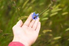 Błękitny kwiat z pluskwą na palmie Fotografia Royalty Free