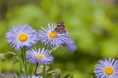 błękitny kwiaty zdjęcie royalty free
