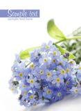 błękitny kwiaty Zdjęcia Royalty Free