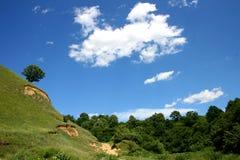 błękitny lasowej zieleni niebo Fotografia Stock