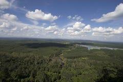 błękitny lasowej zieleni niebo Zdjęcie Royalty Free