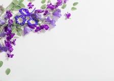 Błękitny lato kwitnie na białym tle Fotografia Royalty Free
