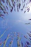 błękitny lawendowy niebo Fotografia Stock