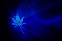 Błękitny liść Zdjęcia Royalty Free
