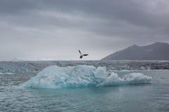 błękitny lodowa lodu Iceland j kuls laguny n rl Zdjęcie Royalty Free
