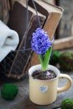 Błękitny lub fiołkowy wiosna hiacynt w filiżance nad starymi książkami i Wielkanocny pocztówkowy pojęcie Fotografia Royalty Free