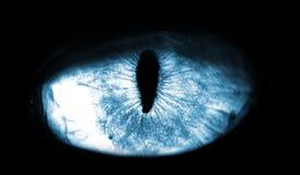 błękitny makro- kota oko na czarnym tle fotografia stock
