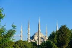 Błękitny Meczetowy Istanbuł za drzewami Zdjęcia Stock