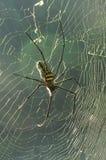 błękitny miękka pająka odcienia sieć Obraz Royalty Free