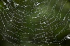 błękitny miękka pająka odcienia sieć fotografia royalty free