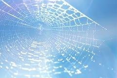 błękitny miękka pająka odcienia sieć Zdjęcie Stock