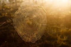 błękitny miękka pająka odcienia sieć obrazy stock