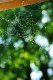 błękitny miękka pająka odcienia sieć Zdjęcie Royalty Free