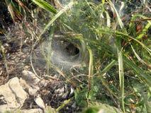 błękitny miękka pająka odcienia sieć Obrazy Royalty Free