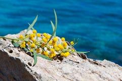 Błękitny morze, kamienie, żółta akacja, mimozy, fotografia stock