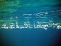 Błękitny morze z ampułą gromadzi się ryba obrazy stock