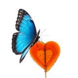 Błękitny motyl na czerwonym cukierku Zdjęcia Stock