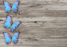 Błękitny motyl na drewnianym tle Zdjęcia Royalty Free