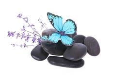 Błękitny motyl na kamieniach i lawendowym kwiacie Fotografia Royalty Free