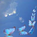 błękitny motyle Zdjęcie Stock