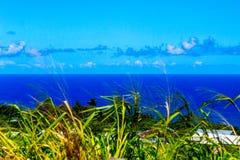 Błękitny ocean z Bławym niebem, trzcina cukrowa w przedpolu Obrazy Stock