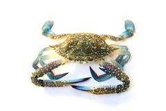 Błękitny Pływacki krab Zdjęcia Royalty Free