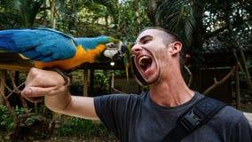 Błękitny papugi, ary ptak na mężczyzna ` s ręce w ara ptaka Halnym parku/, Honduras Zdjęcie Stock