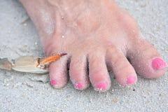 błękitny pazura kraba target55_0_ palec u nogi Zdjęcie Stock