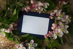 Błękitny photoframe z świeżymi wiosny okwitnięcia gałąź Zdjęcia Royalty Free