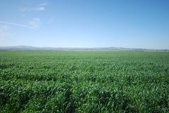 błękitny poly zieleni nieba Fotografia Royalty Free