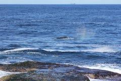błękitny przelotnego spojrzenia morza wieloryb Fotografia Royalty Free
