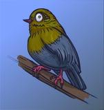 Błękitny ptak na dennym błękitnym tle Obraz Stock