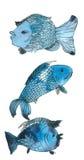 błękitny ryba Obrazy Royalty Free