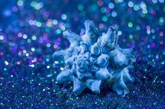 Błękitny seashell na błyszczącym tle Fotografia Royalty Free